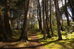 森林在哥伦比亚 免版税库存照片