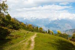 森林在喜马拉雅山的秋天 库存照片