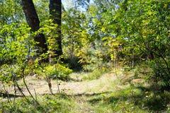 森林在夏天 库存照片