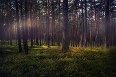 森林在夏天 免版税库存照片