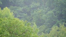 森林在大雨中 影视素材