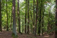 森林在巴伐利亚 库存照片