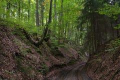 森林在巴伐利亚 免版税图库摄影
