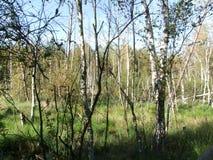 森林在巴法力亚森林与停泊 免版税图库摄影