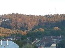 森林在房子里 免版税库存照片