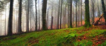 森林在托斯卡纳意大利在秋天 图库摄影