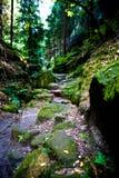 森林在撒克逊人的瑞士 免版税库存图片