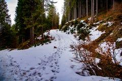 森林在早期的春天,在雪以后 免版税图库摄影