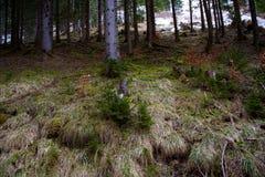 森林在早期的春天 库存图片