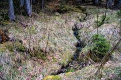 森林在早期的春天 免版税库存图片