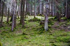 森林在早期的春天 免版税库存照片