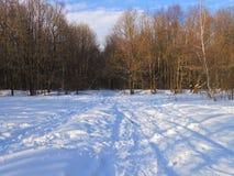 森林在春天的第一天 免版税库存图片