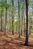 森林在春天 免版税库存照片
