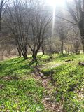 森林在春天 库存图片
