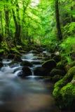 黑森林在春天 库存图片