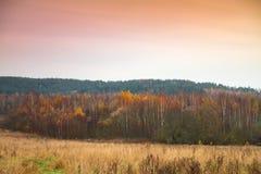 森林在晚秋天 图库摄影