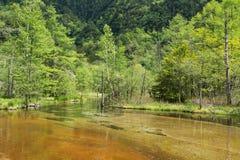 森林在棕色池塘 库存照片