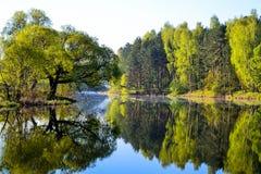 森林在森林湖的镇静大海被反射 在美丽的鸟云彩之上颜色及早飞行金子早晨本质宜人的平静的反映上升海运一些星期日 图库摄影