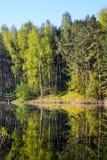 森林在森林湖的镇静大海被反射 在美丽的鸟云彩之上颜色及早飞行金子早晨本质宜人的平静的反映上升海运一些星期日 垂直的视图 库存图片