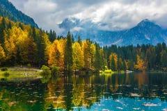 森林在水中被反射 免版税库存照片