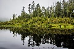 森林在水,阿拉斯加中 免版税库存图片