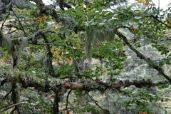 森林在法国 图库摄影