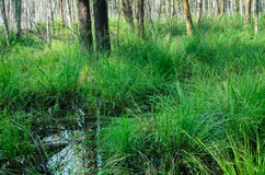 森林在波兰前进 免版税库存图片