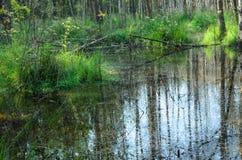 森林在波兰前进 库存图片