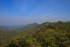 森林在泰国 库存照片