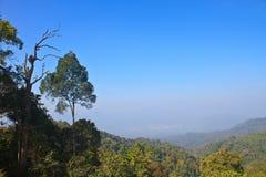 森林在泰国 免版税库存照片