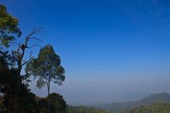 森林在泰国 免版税图库摄影