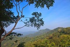 森林在泰国 图库摄影