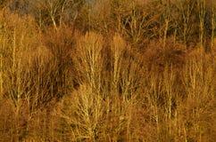 森林在湖旁边 库存图片