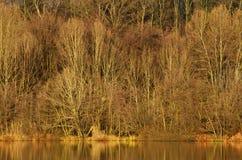 森林在湖旁边 免版税库存照片