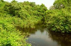 森林在潘塔纳尔湿地 库存照片