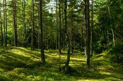 森林在瑞典 免版税库存图片