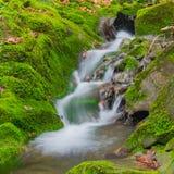 森林在生苔岩石之间的溪瀑布 库存照片