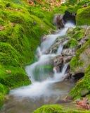 森林在生苔岩石之间的溪瀑布 免版税库存图片