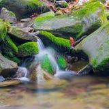 森林在生苔岩石之间的溪瀑布 图库摄影