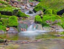 森林在生苔岩石之间的溪瀑布 库存图片