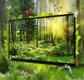 森林在电视屏幕的生活展示 免版税图库摄影