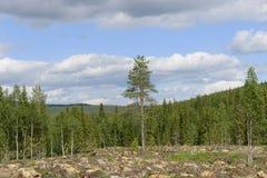 森林在砍伐森林以后 免版税库存图片