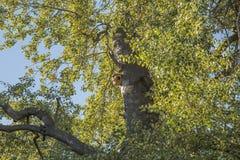 森林在社区公园马德里 库存照片