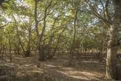 森林在社区公园马德里 免版税库存图片