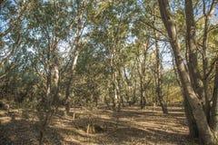 森林在社区公园马德里 图库摄影