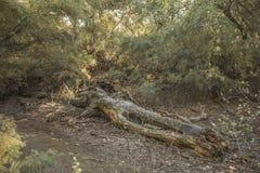 森林在社区公园马德里 免版税库存照片