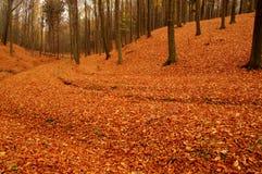 森林在秋天。 免版税库存图片