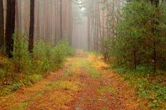 森林在秋天。 免版税图库摄影