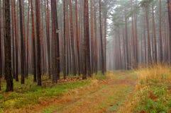 森林在秋天。 库存图片