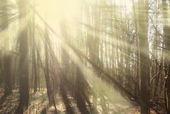 森林在秋天阳光下 图库摄影